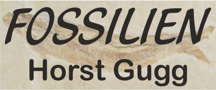 Fossilien Gugg